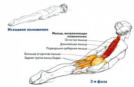 Упражнение для спины для тех, кто много сидит